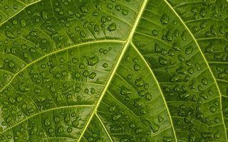 Заставки лист, зеленый, прожилки