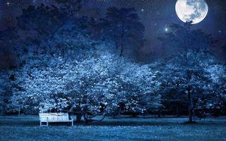 Бесплатные фото ночь,парк,деревья,лавочка,луна,большая,звезды
