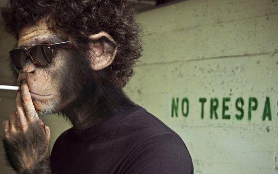 Фото бесплатно обезьяна, курит, сигарета