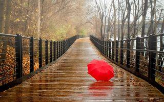 Бесплатные фото осень,деревья,мост,мокрый,листва,зонтик,красный