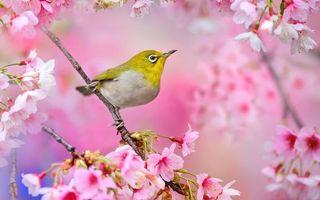 Бесплатные фото перья,крылья,клюв,лапы,ветки,цветы,птицы