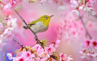 Photo free beak, paws, flowers
