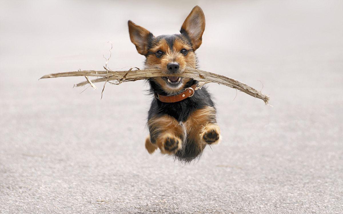 Фото бесплатно пес, палка, бег - на рабочий стол