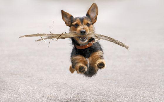 Заставки пес, палка, бег
