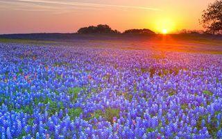 Бесплатные фото поле, цветы, закат, небо, облака, трава, деревья