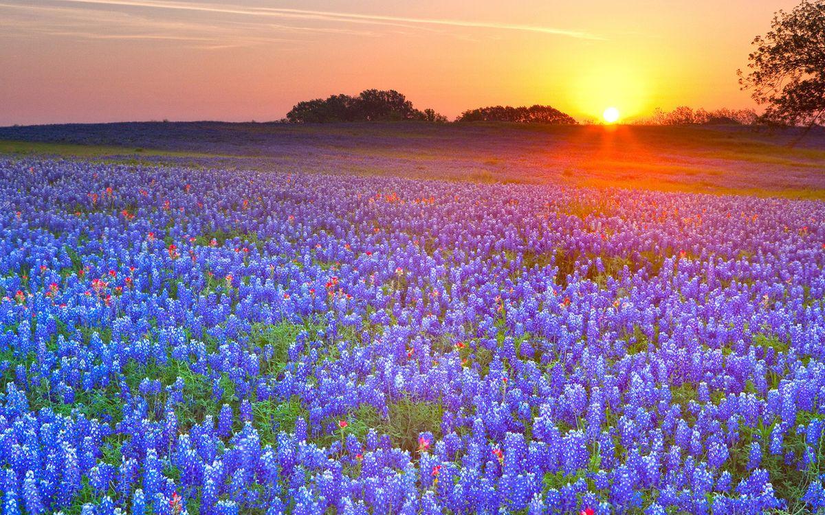 Фото бесплатно поле, цветы, закат, небо, облака, трава, деревья, пейзажи, пейзажи