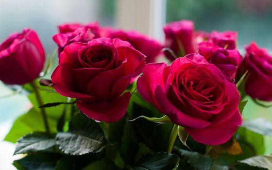 Бесплатные фото пурпурные,розы,букет,цветы