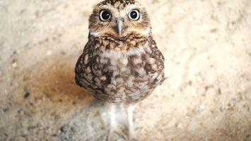 Бесплатные фото сова,перья,клюв,глаза,лапы,песок,взгляд