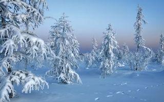 Бесплатные фото сугробы,снег,лес,еслки,следы,животных,зима
