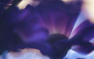Бесплатные фото цветок,лепестки,листья,бутон,серединка,тычинки,фиолетовый