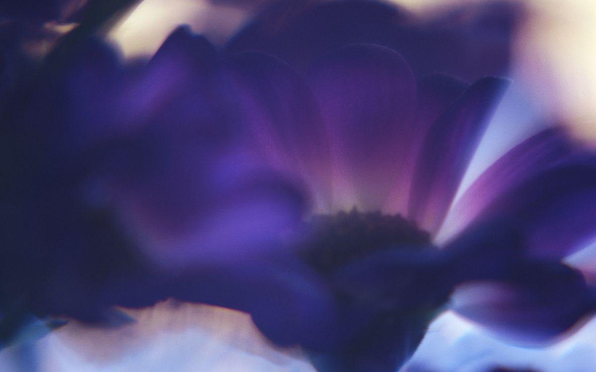 Free photo flower, petals, leaves - to desktop