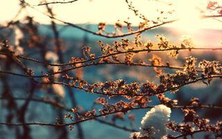 Фото бесплатно весна, ветки, снег