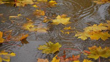 Заставки вода, листья, желтые, капли, разводы, дождь, природа