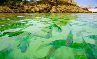 Фото бесплатно водоем, поверхность, рыба