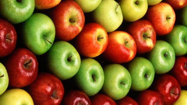 Бесплатные фото яблоки,красные,зеленые,желтые,урожай,ветки,фрукты,еда