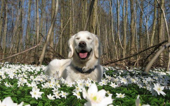 Фото бесплатно природа, цветы, весна