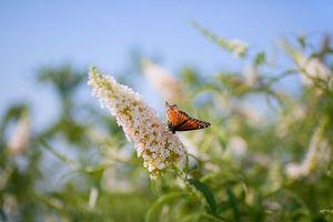 Фото бесплатно бабочка, поле, лето