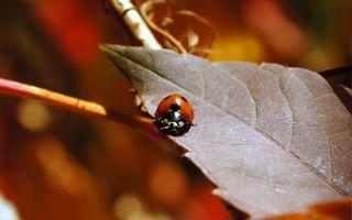 Бесплатные фото божья,коровка,лист,ветка,красная,горошек,насекомые