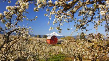 Бесплатные фото дерево,цветет,ветки,дом,красный,горы,пейзажи