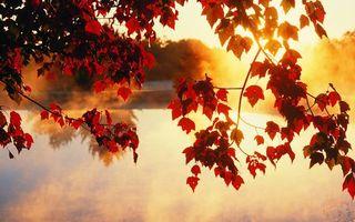 Фото бесплатно дерево, золотой, листья