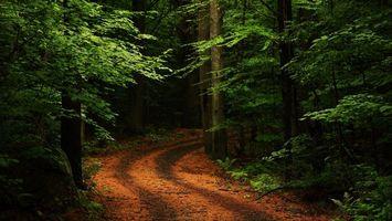 Фото бесплатно свою очередь, листва, деревья