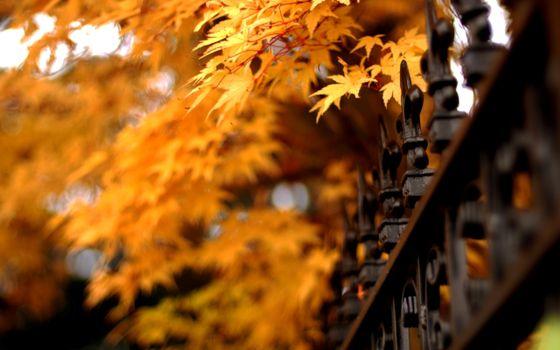 Бесплатные фото осень,дерево,листья,желтые,декоративный,забор,природа