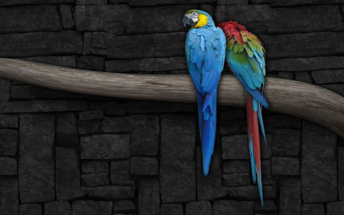 Фото бесплатно попугаи, ара, перья, цветные, клюв, ветка, птицы, птицы