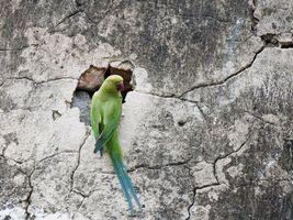 Фото бесплатно попугай, клюв, крылья, хвост, перья, стена, выбоина