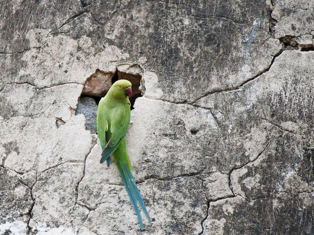 Фото бесплатно попугай, клюв, крылья - на рабочий стол