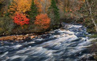 Бесплатные фото река,течение,камни,пороги,деревья,лес,осень