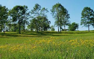 Бесплатные фото трава,деревья,стволы,кроны,листья,ромашки,природа
