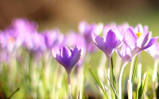 Заставки цветки, подснежники, лепестки