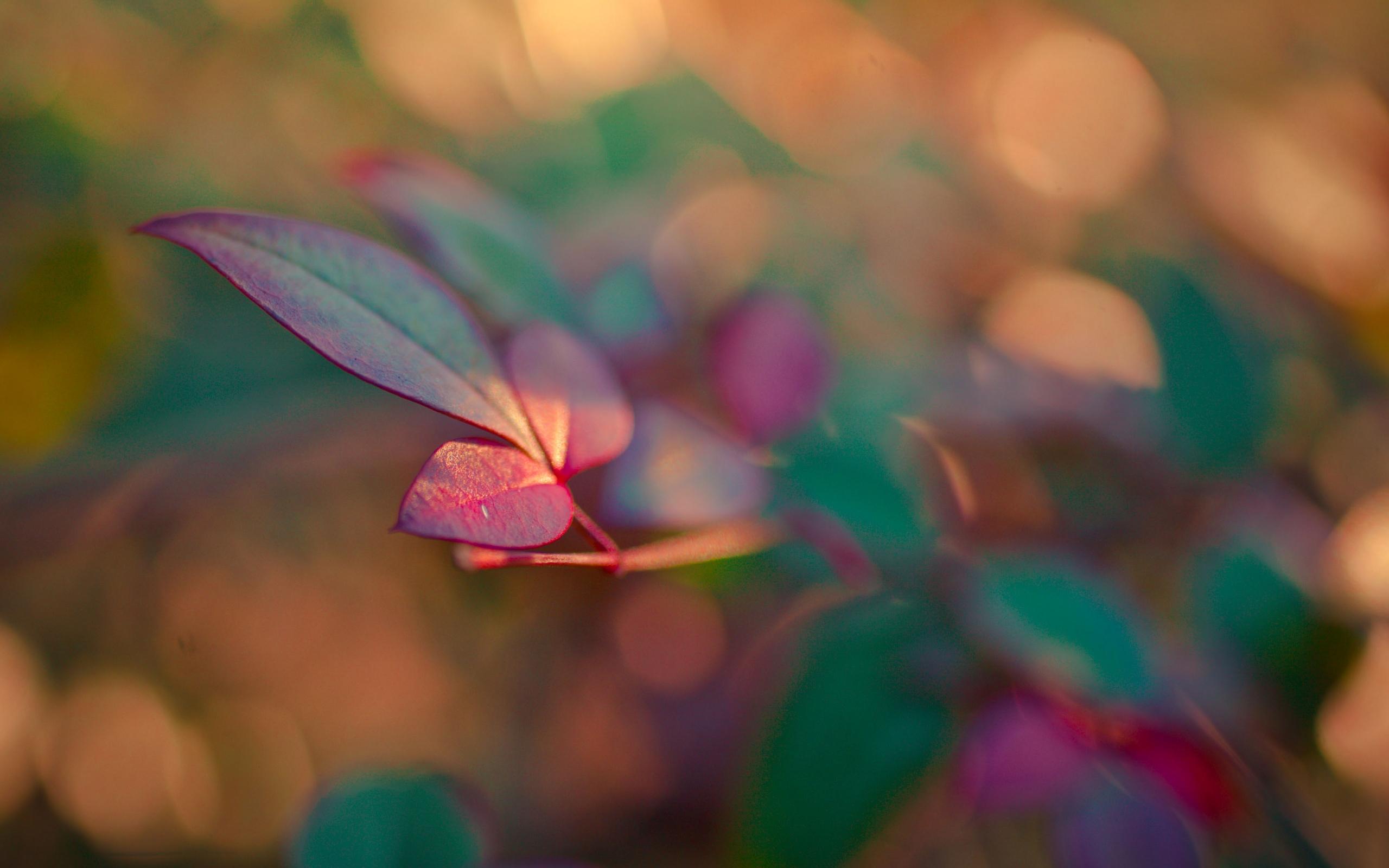 ветка, листья, зелено-красные