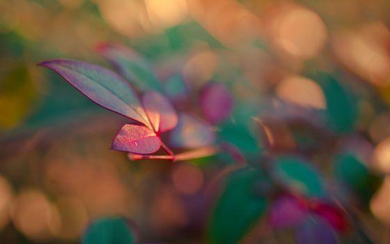 Фото бесплатно ветка, листья, зелено-красные