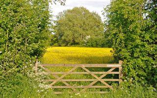 Бесплатные фото забор,поле,деревья,лето,листья,небо,трава