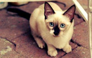 Заставки кот,кошка,черный,пол,усы,глаза,животные