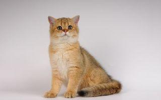 Заставки кот, кошка, шерсть