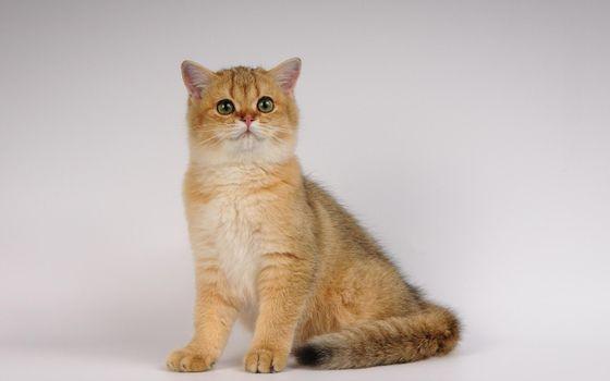 Фото бесплатно кот, кошка, шерсть