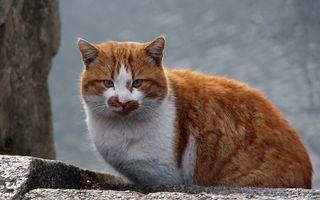 Бесплатные фото кот, шерсть, взгляд, камень, усы, уши, тень