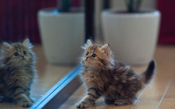 Бесплатные фото котенок,пушистый,комната,зеркало,играет,кошки