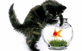 Бесплатные фото котёнок,аквариум,рыбка,животные