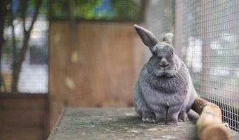 Фото бесплатно кролик, серый, уши
