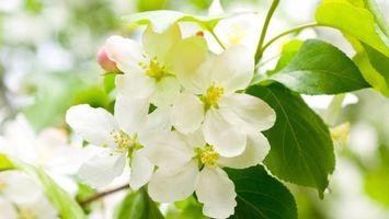 Фото бесплатно цветы, зелень, лето