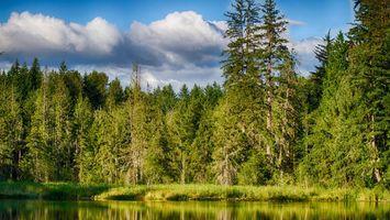 Бесплатные фото лес,деревья,озеро,вода,трава,зеленая,небо