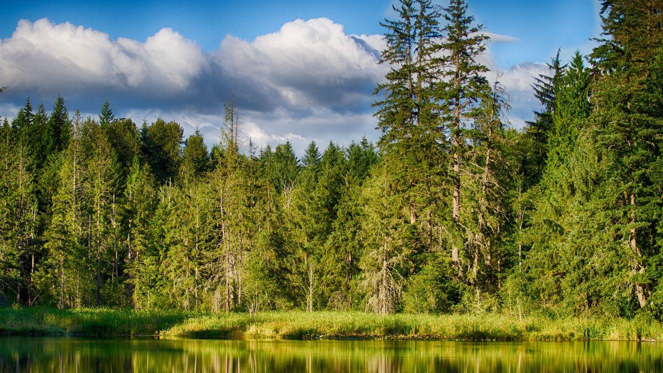 Фото бесплатно озеро, зеленая, трава - на рабочий стол