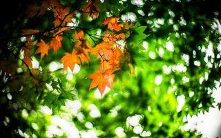 Фото бесплатно листья, крона, дерево