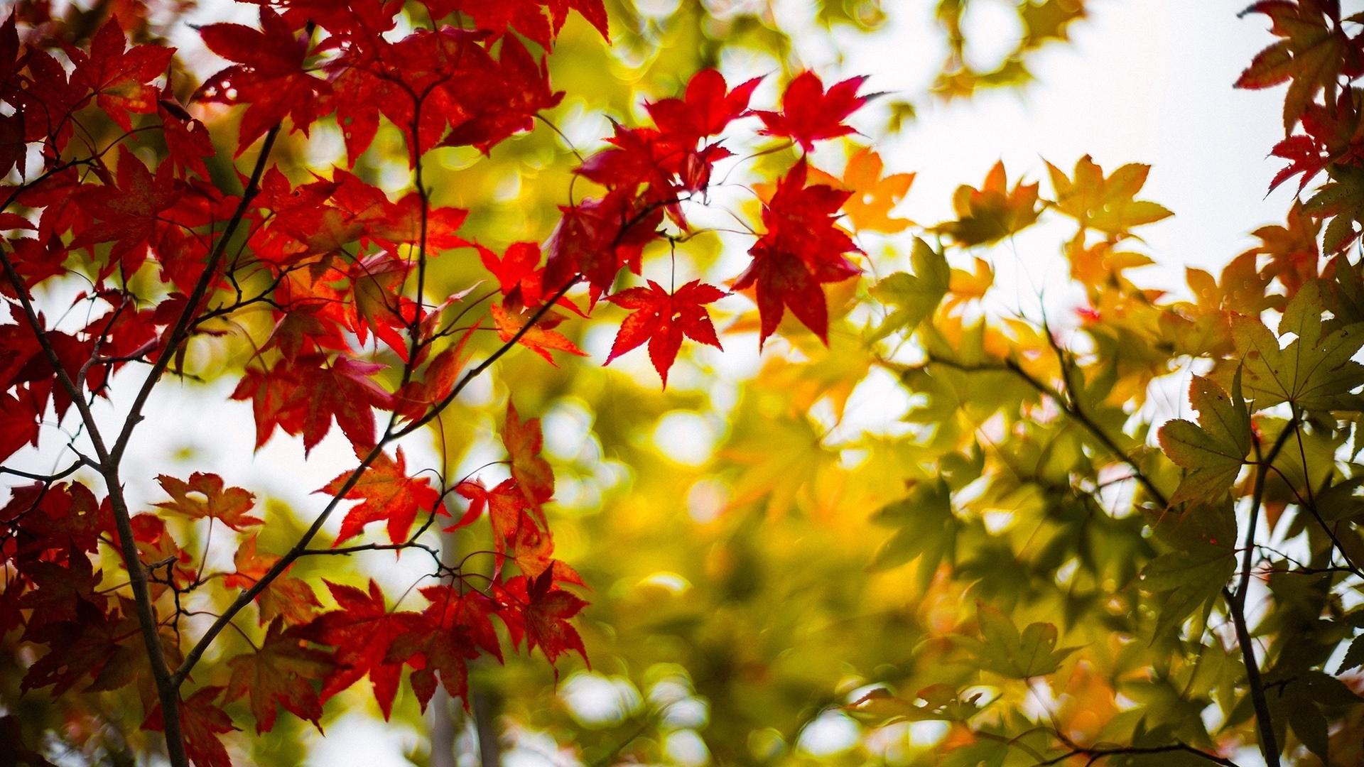 Обои листья, осень, небо, свет