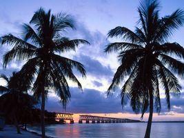 Фото бесплатно море, пальмы, мост