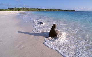 Заставки морской котик, море, волны