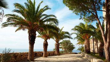Бесплатные фото пальмы,вода,пляж,песок,берег,солнце,пейзажи